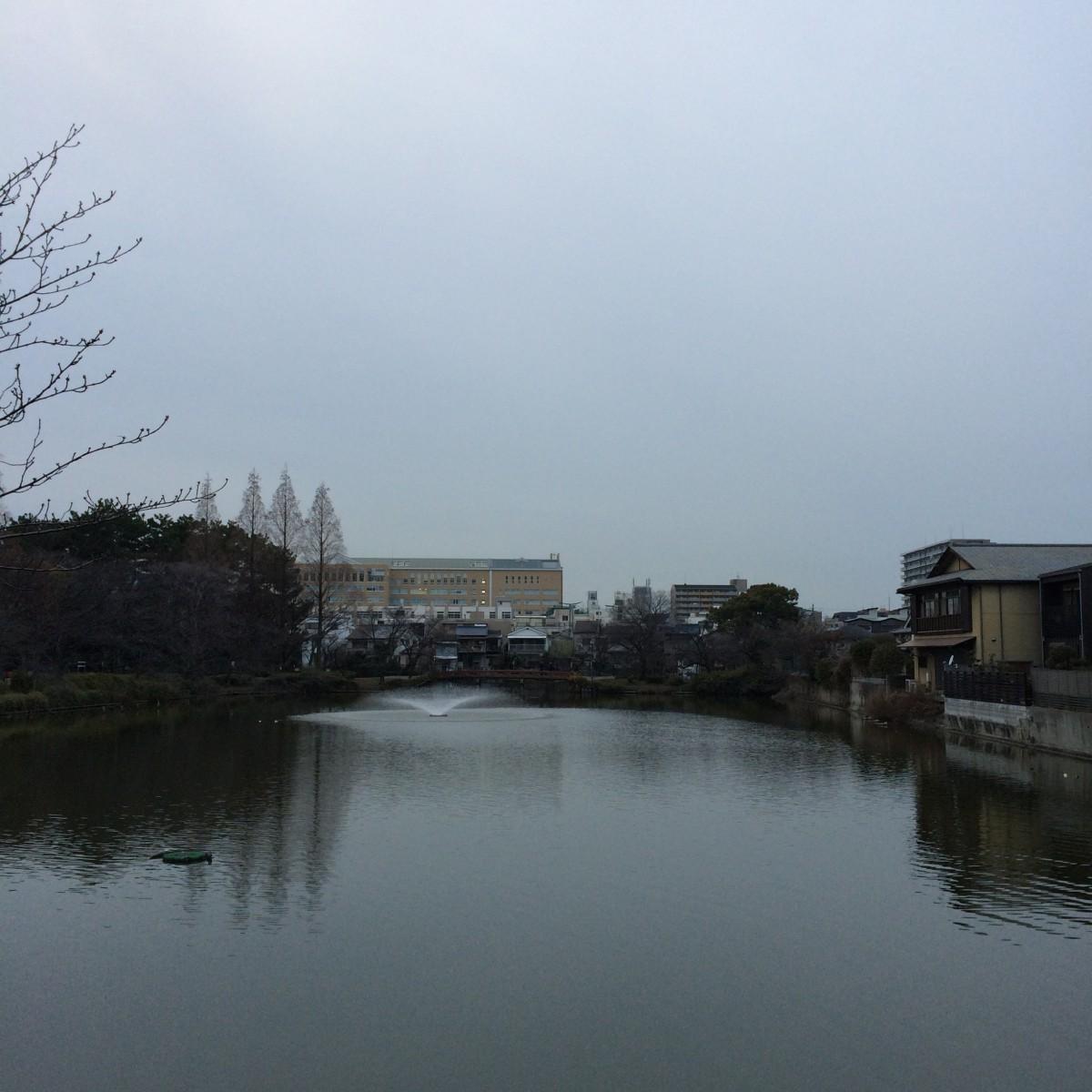 今日の夕方の桃が池