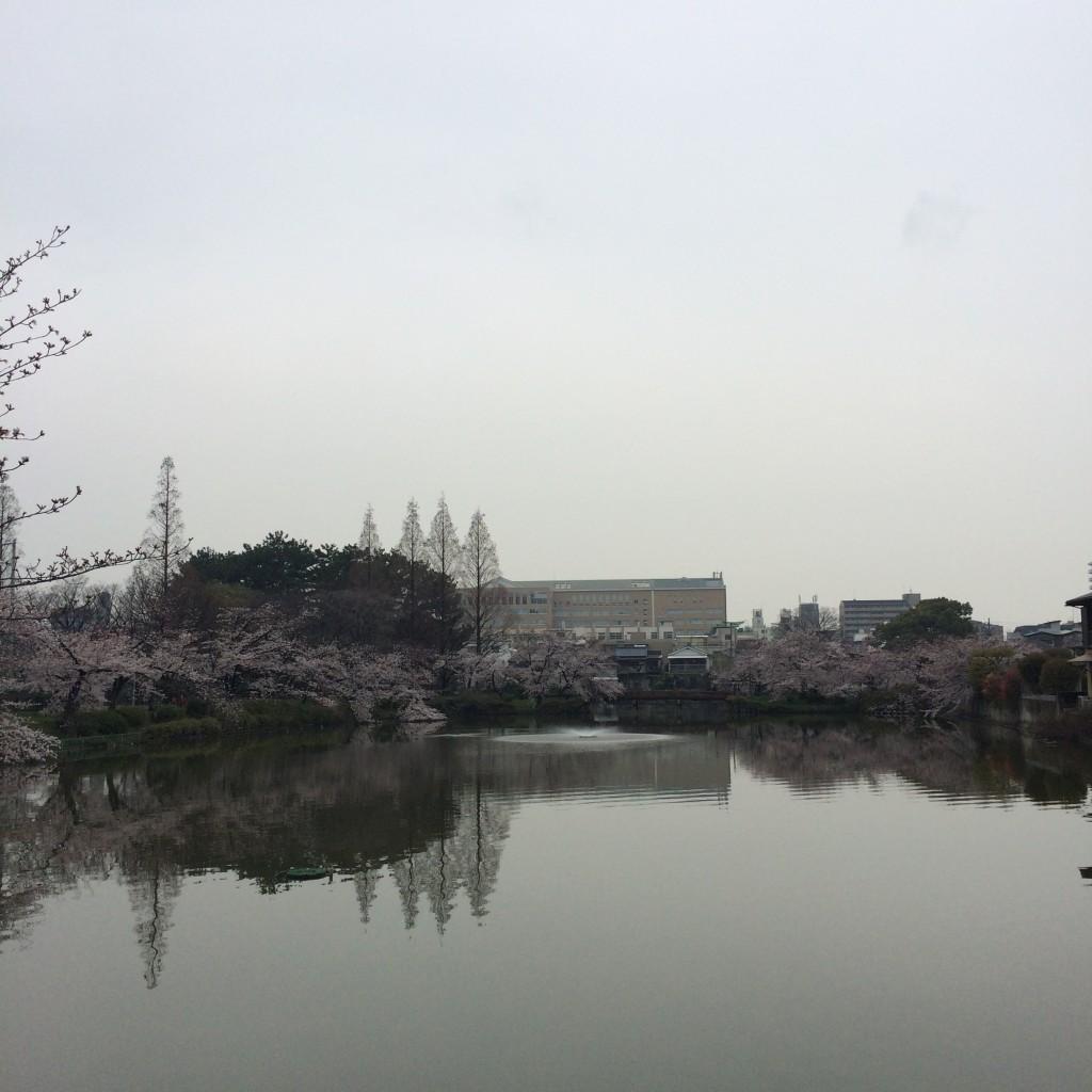 2015年4月1日桃が池