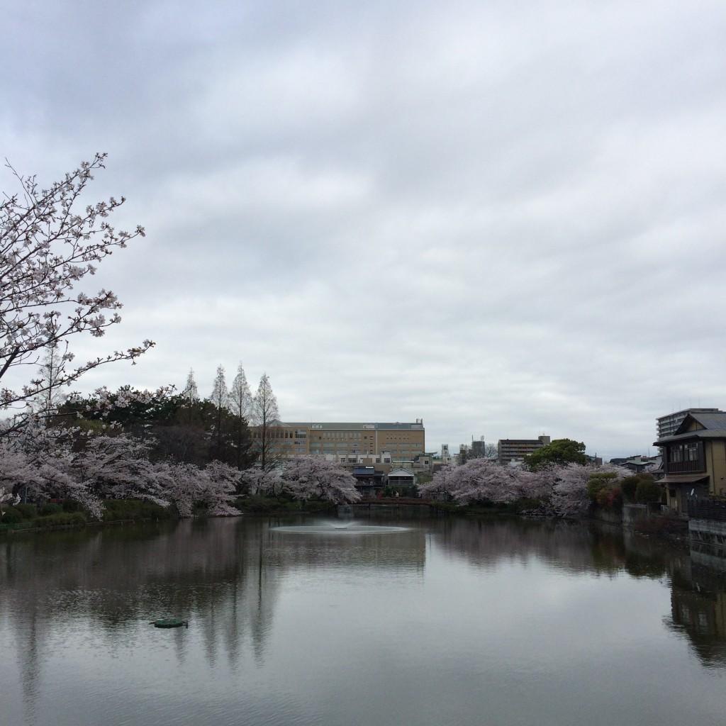 2015年4月4日(土)朝8時過ぎの桃が池