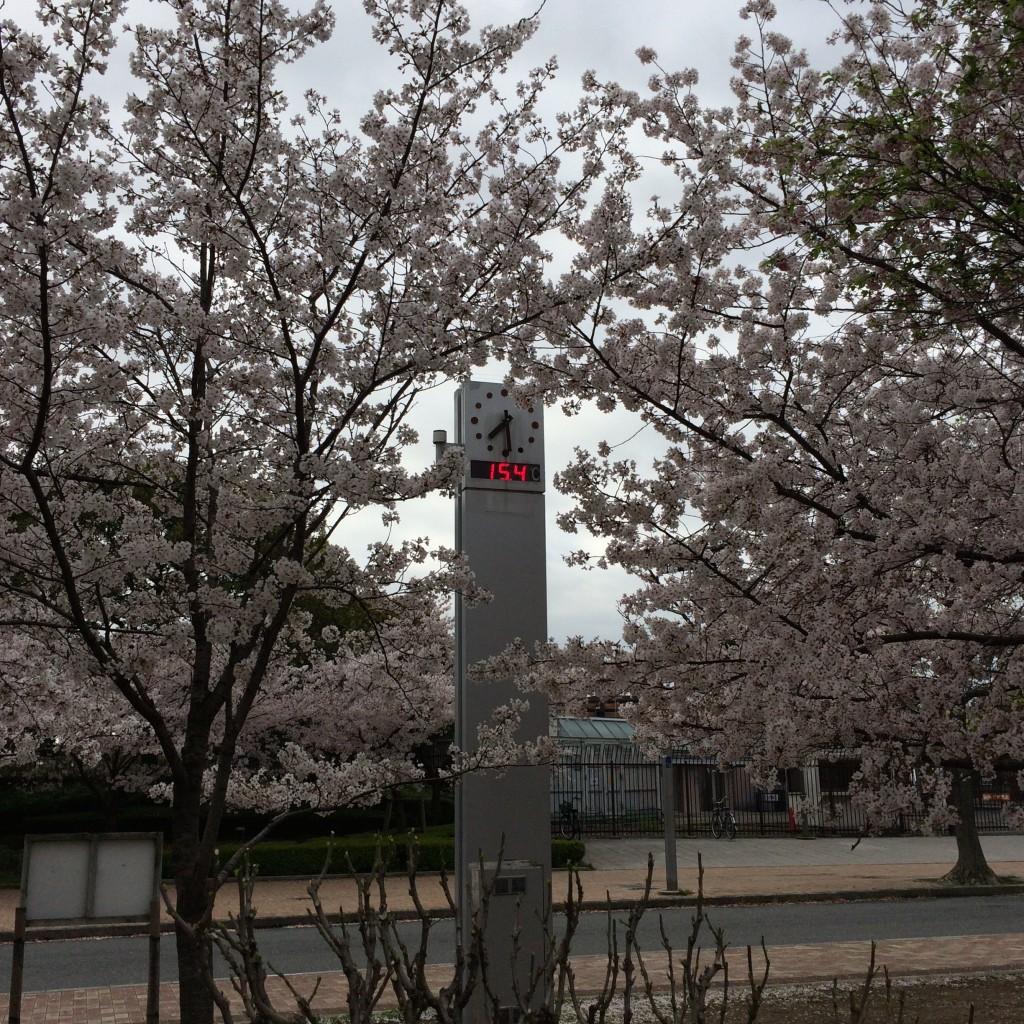 2015年4月4日(土)長居公園時計温度計