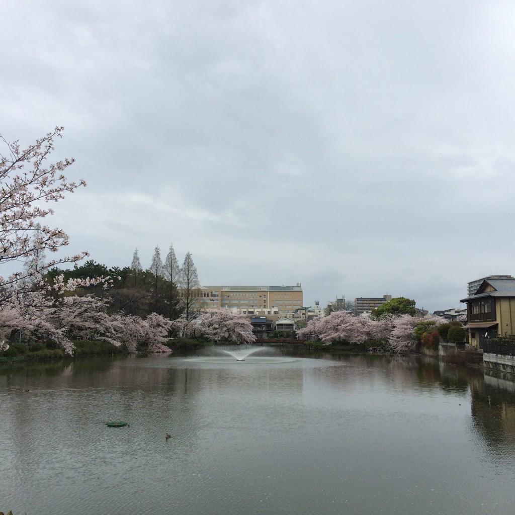 2015年4月5日(日)の桃が池