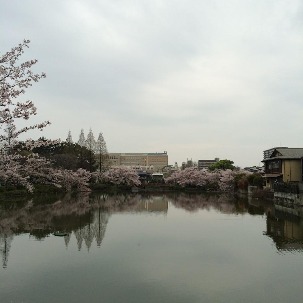2015年4月6日(月)桃が池