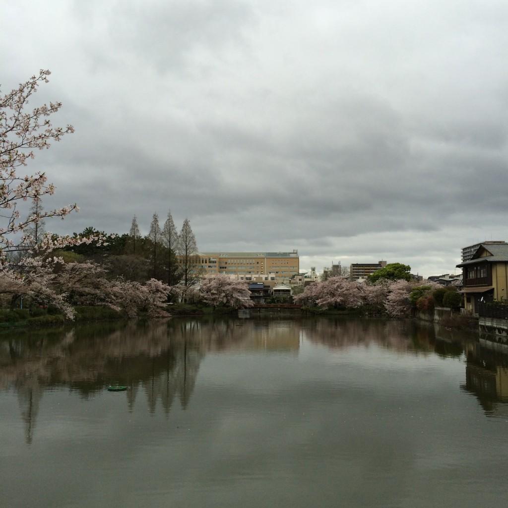 2015年4月7日(火)朝7時前の桃が池