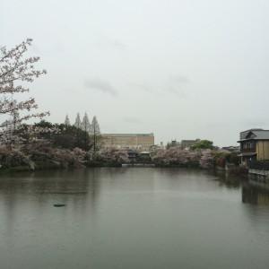 2015年4月8日(水)桃が池