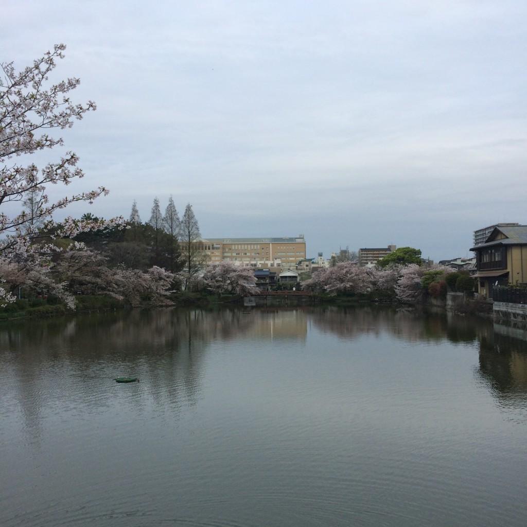 2015年4月9日(木)朝6時過ぎの桃が池