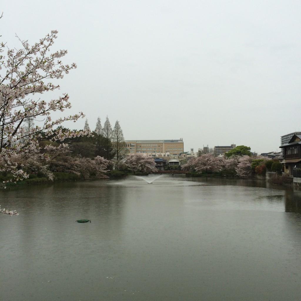 2015年4月10日(金)朝7時頃の桃が池