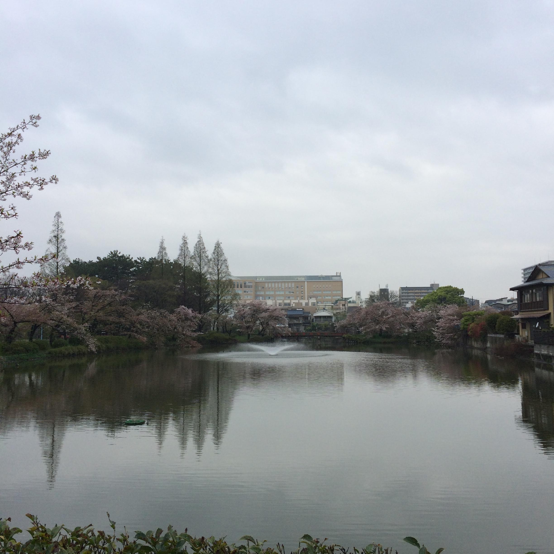 2015年4月11日の桃が池