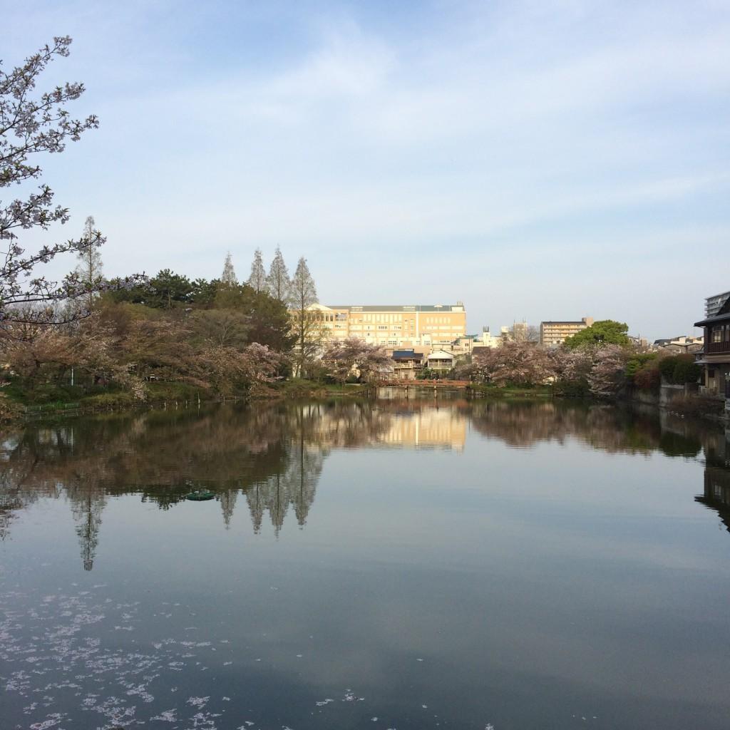2015年4月12日(日)朝6時過ぎの桃が池