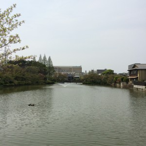 2015年4月16日(木)の桃ヶ池