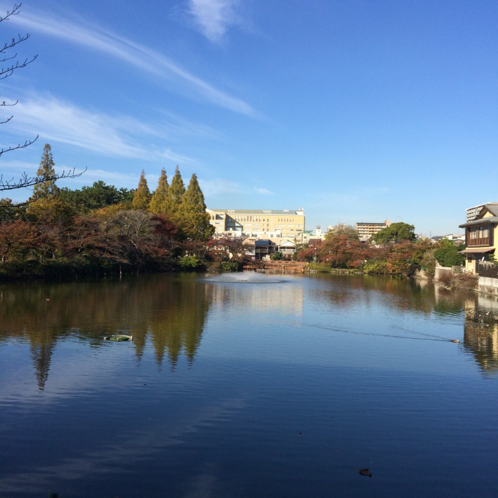 2015年11月16日(月)8時半頃の桃が池